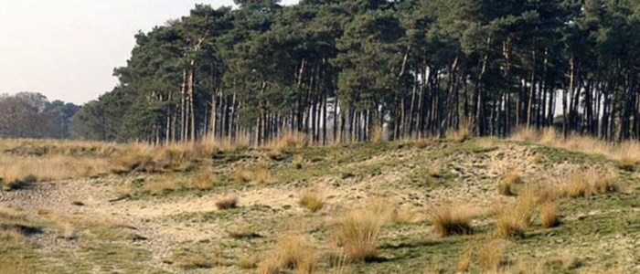 Utrechtse heuvelrug 2